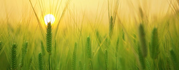 Стрессоустойчивость растений — залог высокого урожая